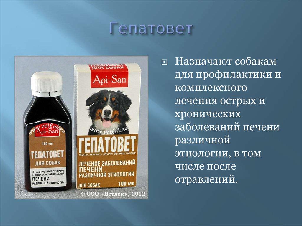 Гепатовет для собак
