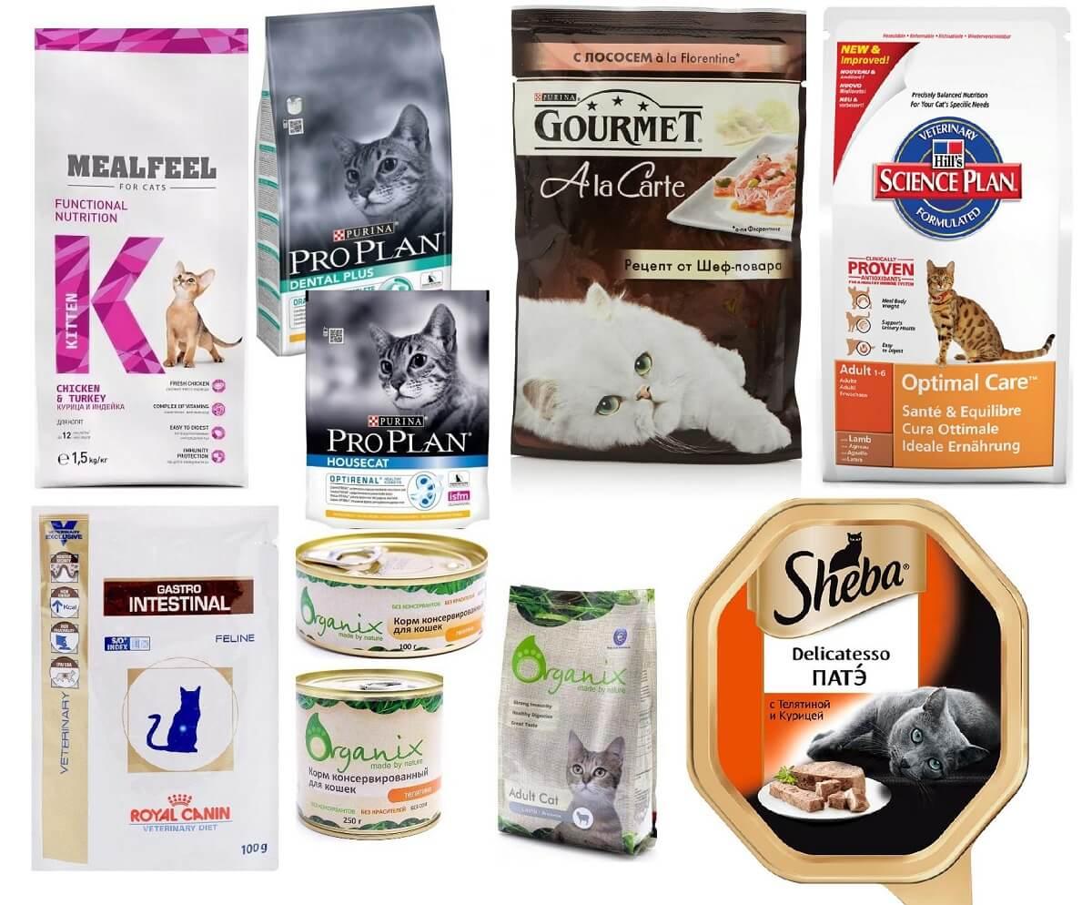 Рейтинг влажных кормов для котят в 2019 году