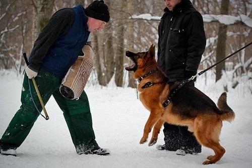 ОКД для собак (общий курс дрессировки) самостоятельно