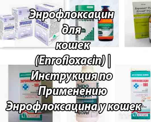 Препарат Энроксил в лечении инфекционных заболеваний у кошек