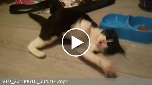 Эпилепсия у кошек: симптомы и лечение заболевания