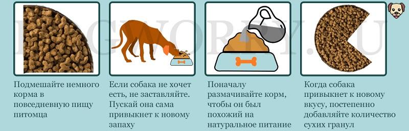 Собака отказывается от сухого корма: почему и что делать