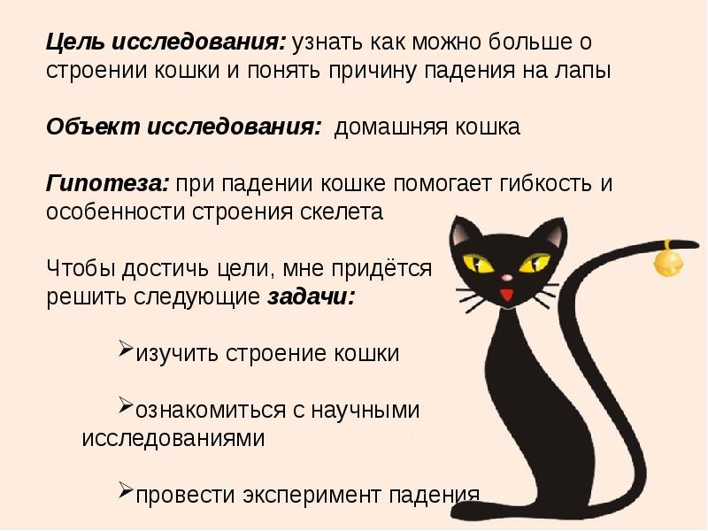Почему кошки не всегда отзываются на своё имя?