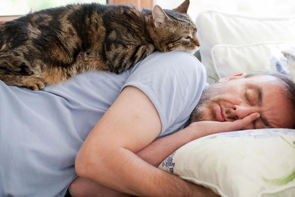 Почему кошки и коты топчут нас лапками
