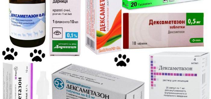 Дексаметазон для кошек: инструкция по применению