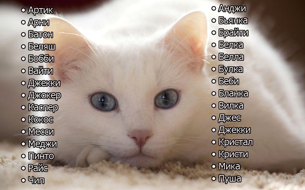 Что в имени тебе моём: подбираем кличку для кошечки