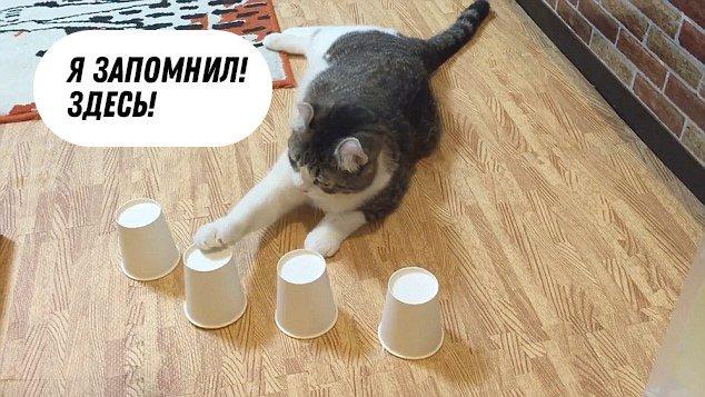 Кошачья память: что и как долго помнит кот?