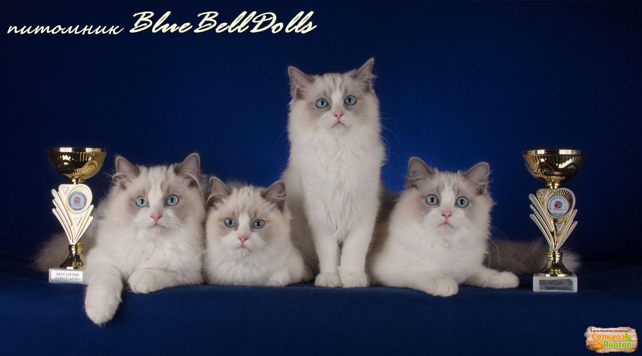 Вакцина от аллергии на кошек