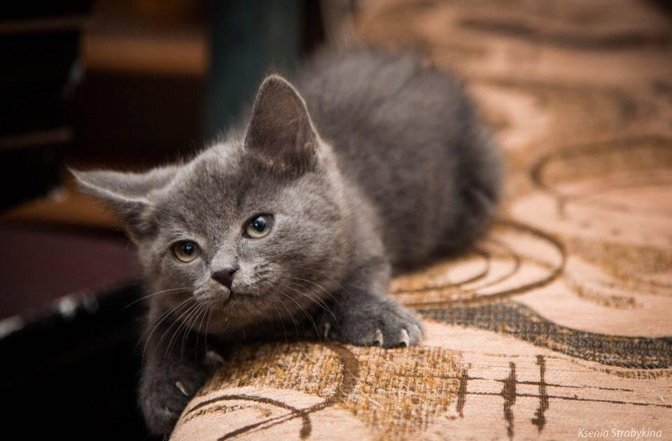 Как выбрать имя для котёнка-мальчика любой породы и цвета