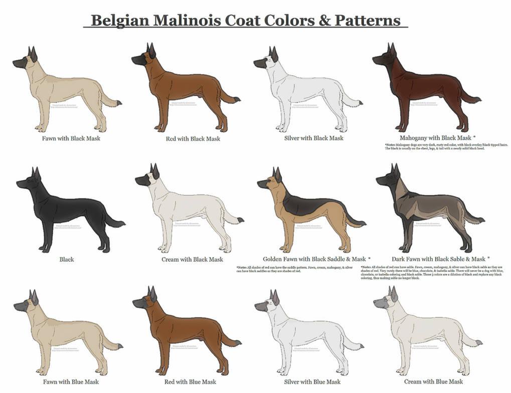 Окрас немецкой овчарки: рыжая, зонарная и другие