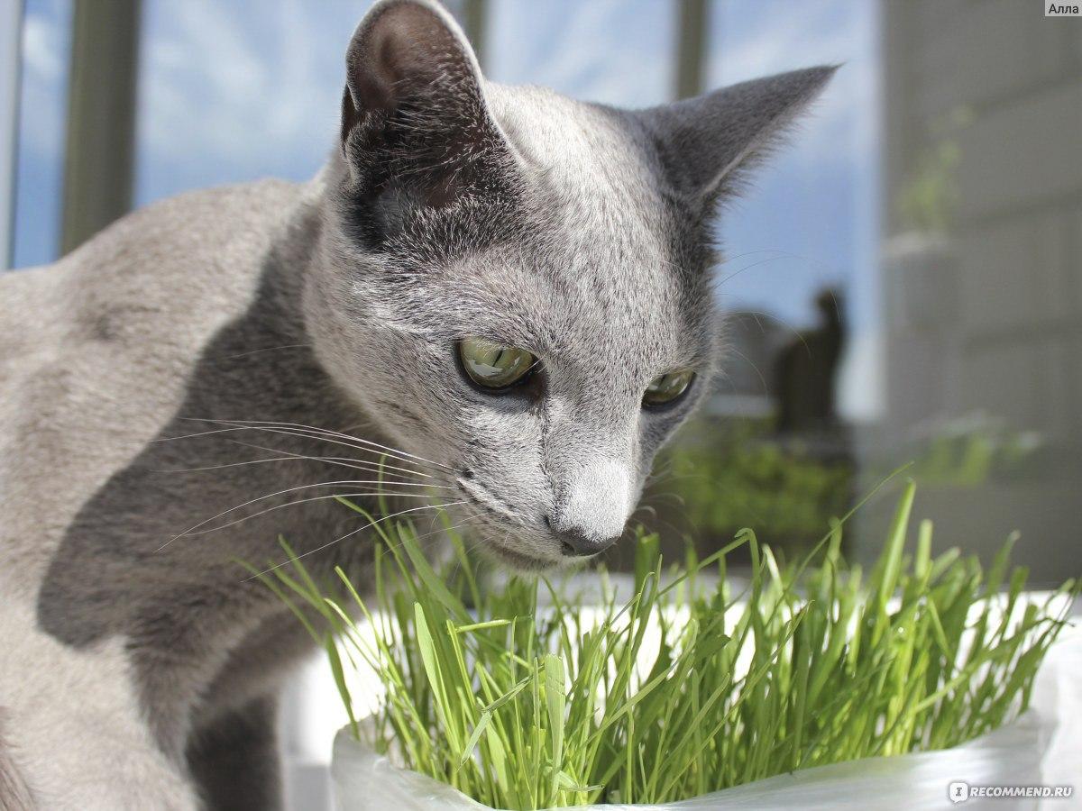 Как вывести шерсть из желудка кошки в домашних условиях