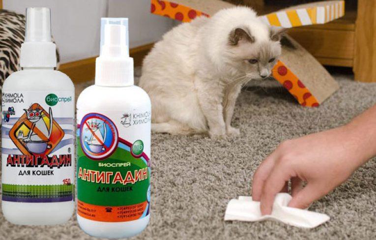 Антигадин для кошек: способ приучения питомца к лотку