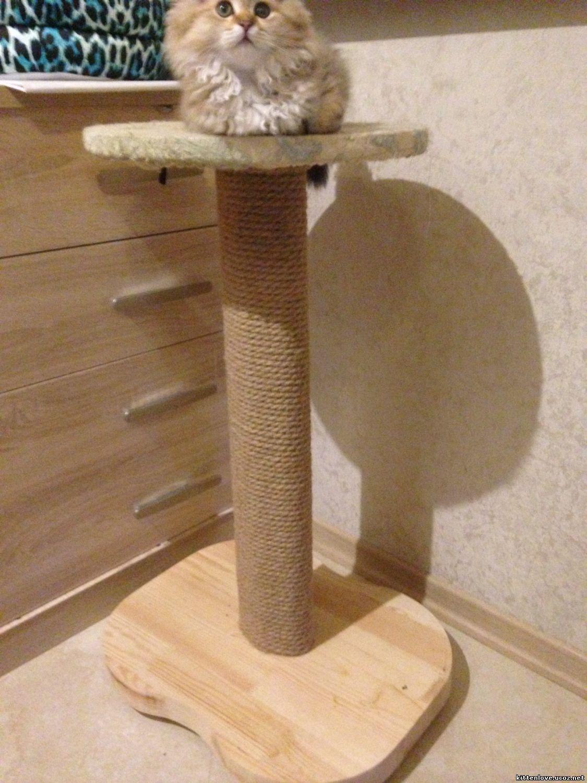Как сделать когтеточку своими руками: радуем кошку новым подарком