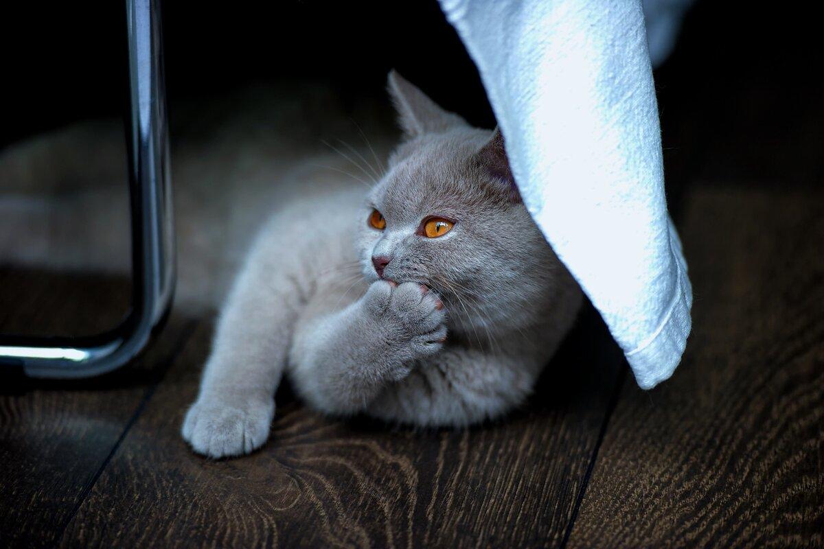 9 признаков того, что ваша кошка вами манипулирует