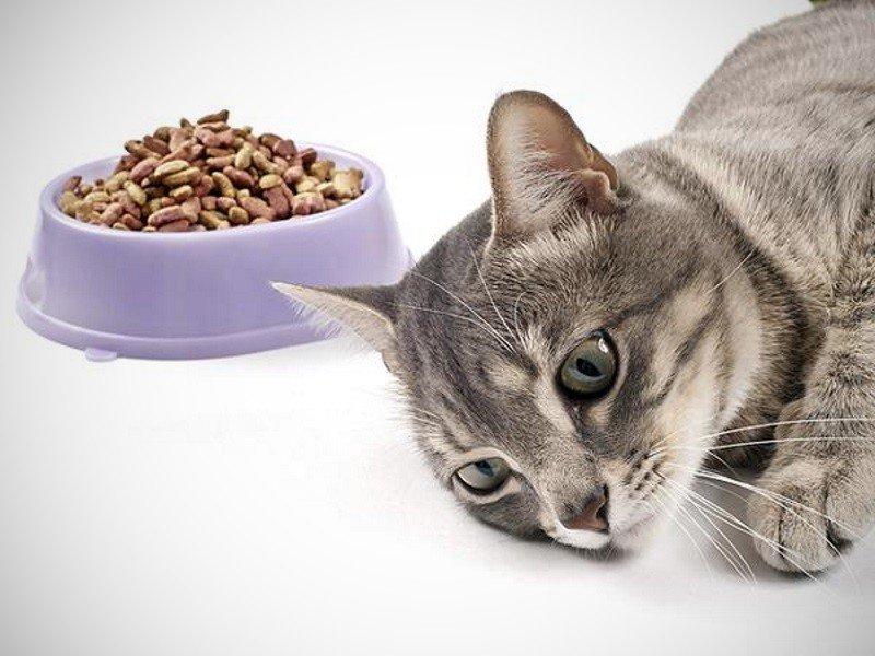 Кошка не ест: почему отказывается от еды