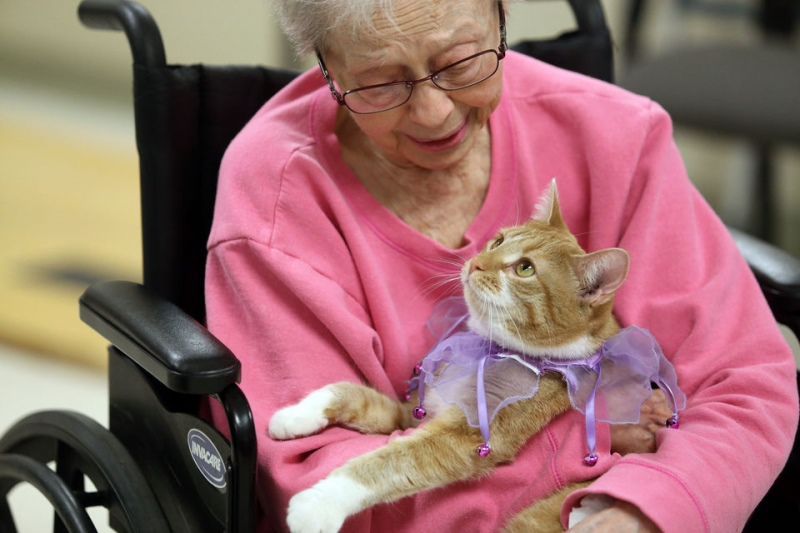 Какой возраст считается пожилым у кошек. Уход за пожилой кошкой