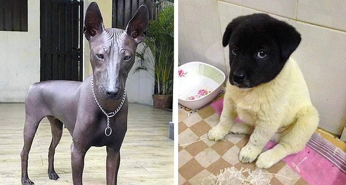 10 смешных собак-метисов, а покупали их как породистых