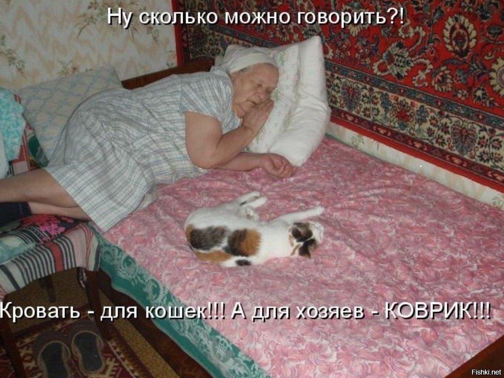 Кот не дает спать по ночам: что делать и как с ним бороться