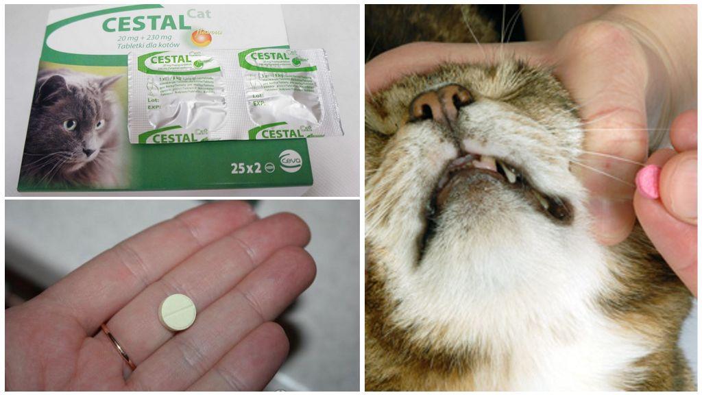 Инструкция по применению Цестала для кошек