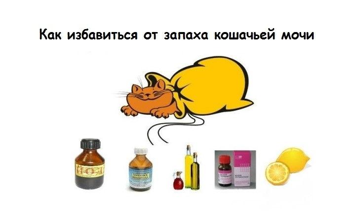 У кота моча пахнет аммиаком: почему воняет