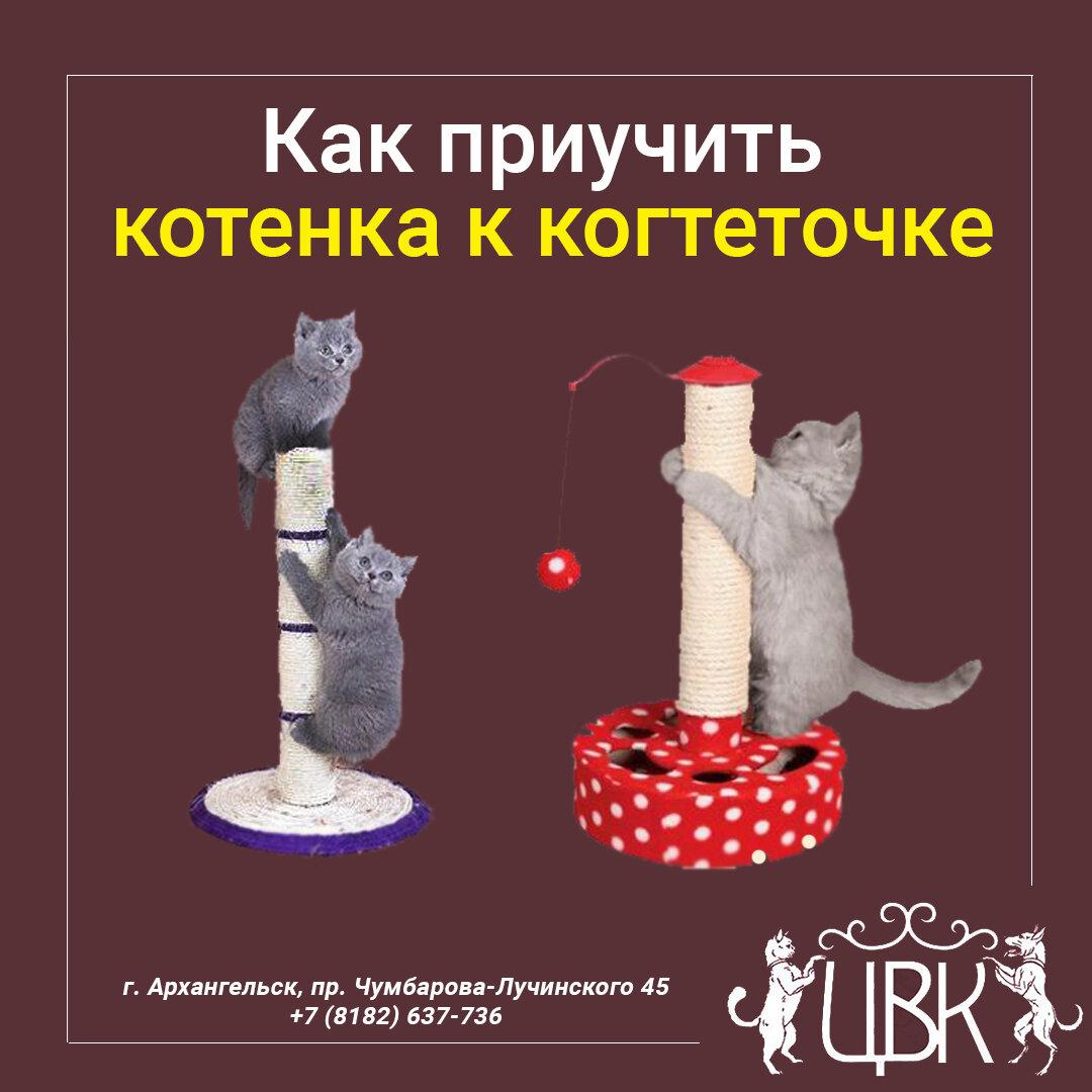 Как приучить котенка к когтеточке: хитрости дрессировки