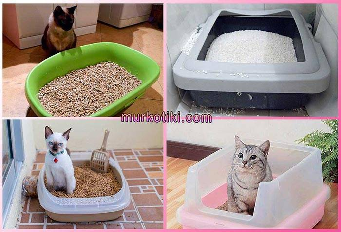 Лучшие лотки для котенка