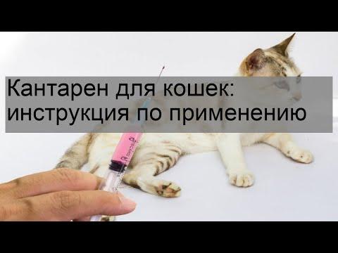 Поливак-ТМ для кошек: инструкция по применению