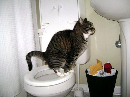 Кот не может сходить в туалет по маленькому