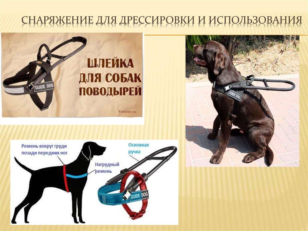 Как научить собаку командам в домашних условиях