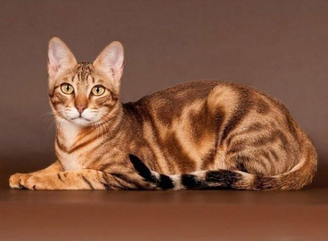 Сококе: кошки и коты