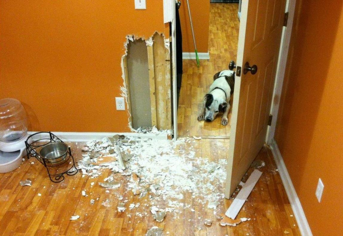 Как сохранить ремонт в квартире, когда у домашних животных свое понимание комфорта