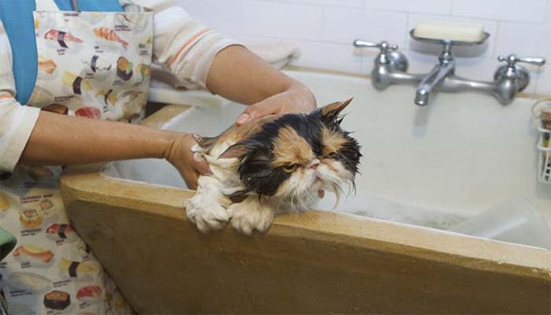 Можно ли мыть собаку дегтярным мылом или хозяйственным