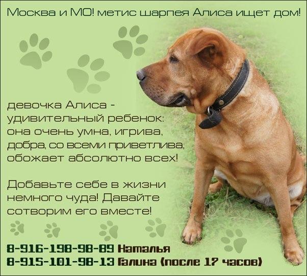 Клички собак кобелей: оригинальные русские имена