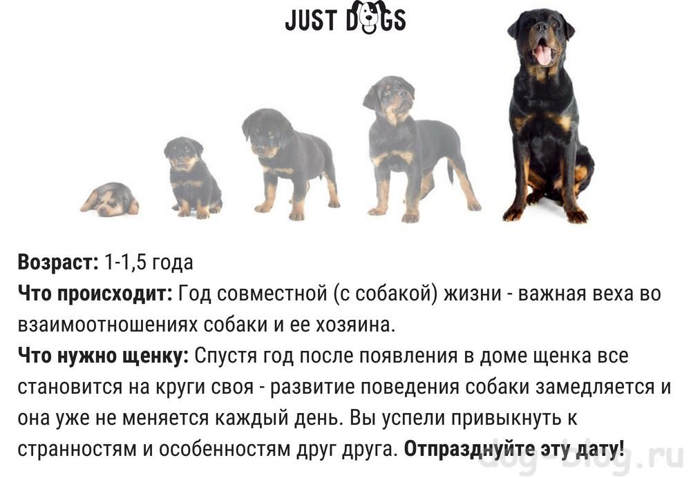 До какого возраста растут собаки мелких, средних и крупных пород