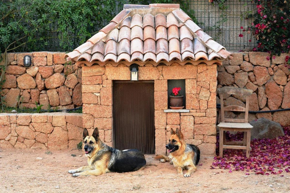 Сторожевые породы собак для частного дома