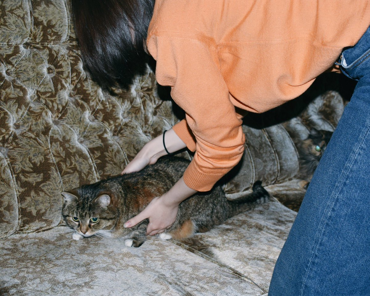 Как приручить кота и дикого котенка с улицы