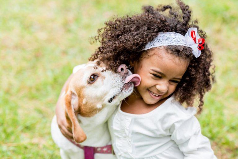 Кошки против собак: кого завести