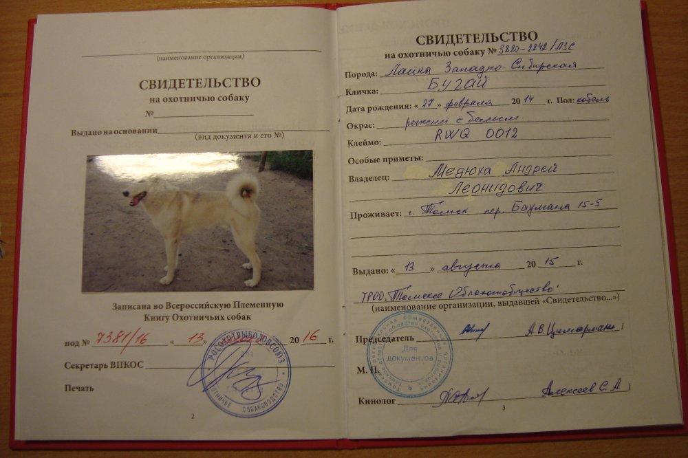 Документы РКФ на собаку: что это и как сделать