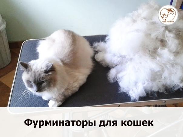 7 ошибок, которые совершают некоторые хозяева кошек