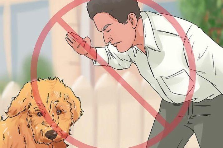 Как наказывать собаку правильно за непослушание