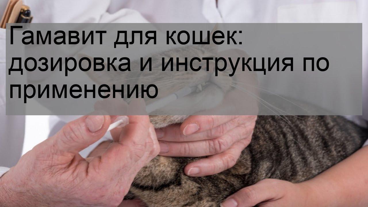 Гамавит для кошек: дозировка и инструкция по применению