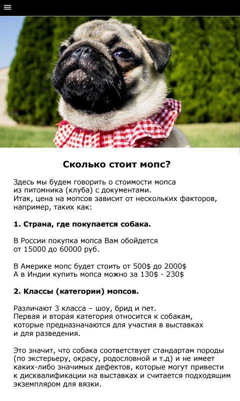 Мопс — порода собак