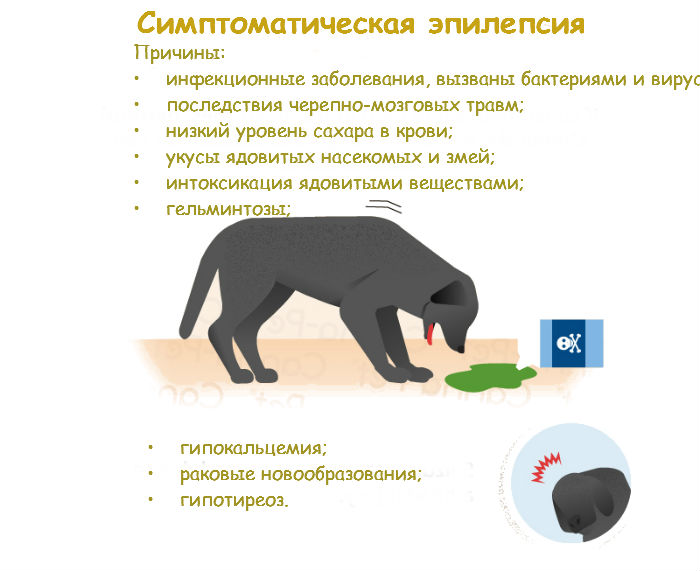 Почему собака теряет сознание: причины обмороков