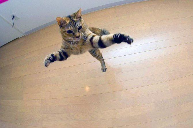 Кот носится как ненормальный по квартире и мяукает