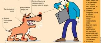 Укусила собака: что делать