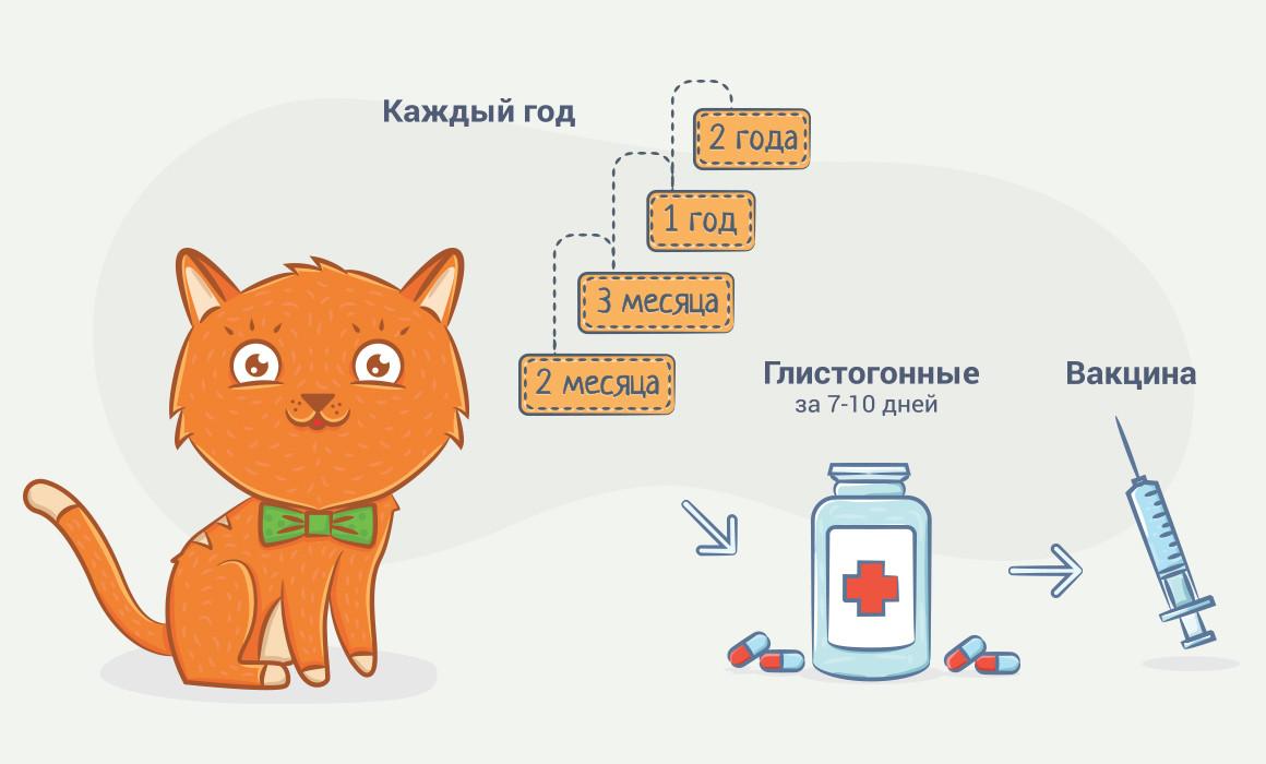 За сколько до прививки нужно глистогонить собаку