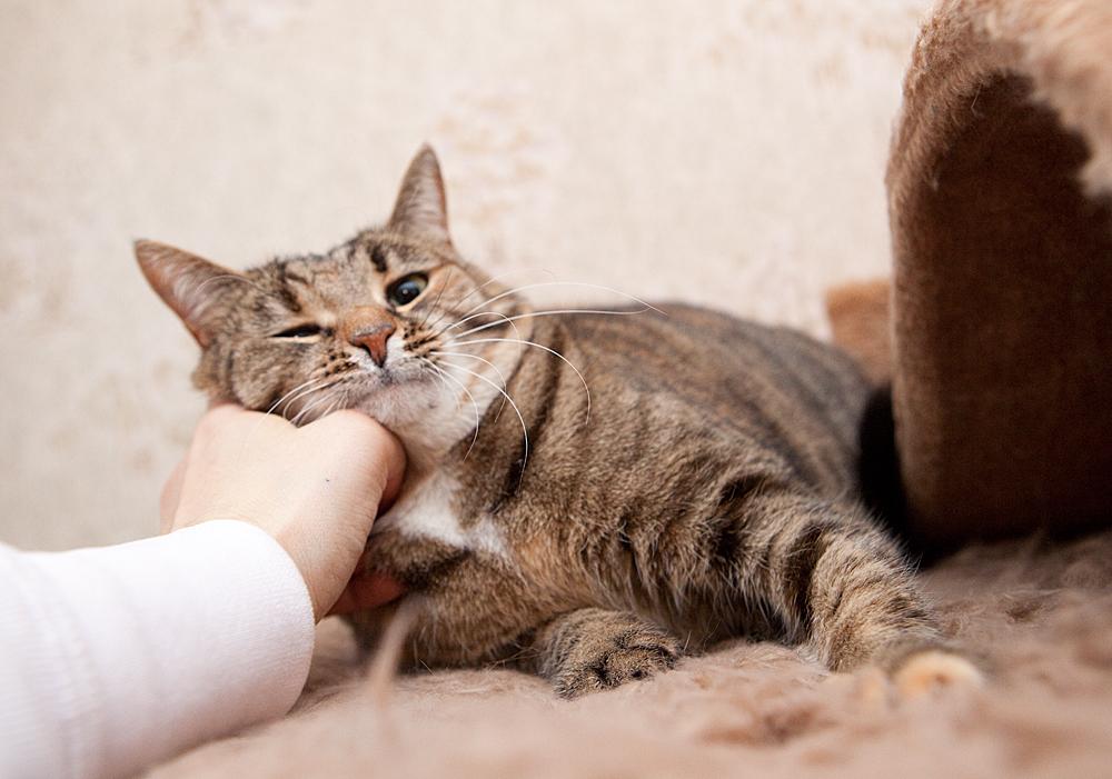 Ласковые кошки: любовь или притворство?
