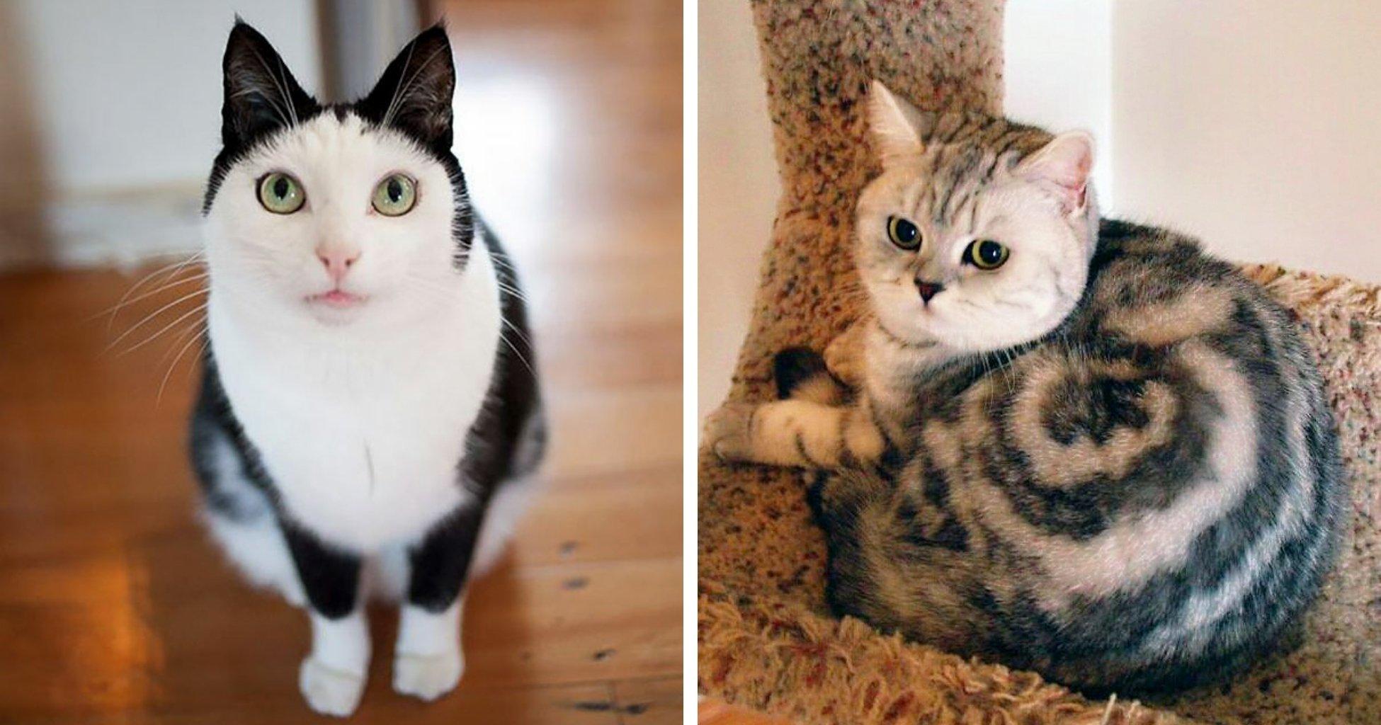 Кот или кошка: выбираем друга в семью с ребёнком