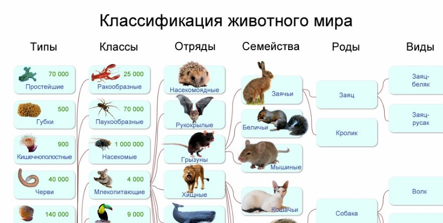 Домашняя кошка: что это такое, описание, систематика