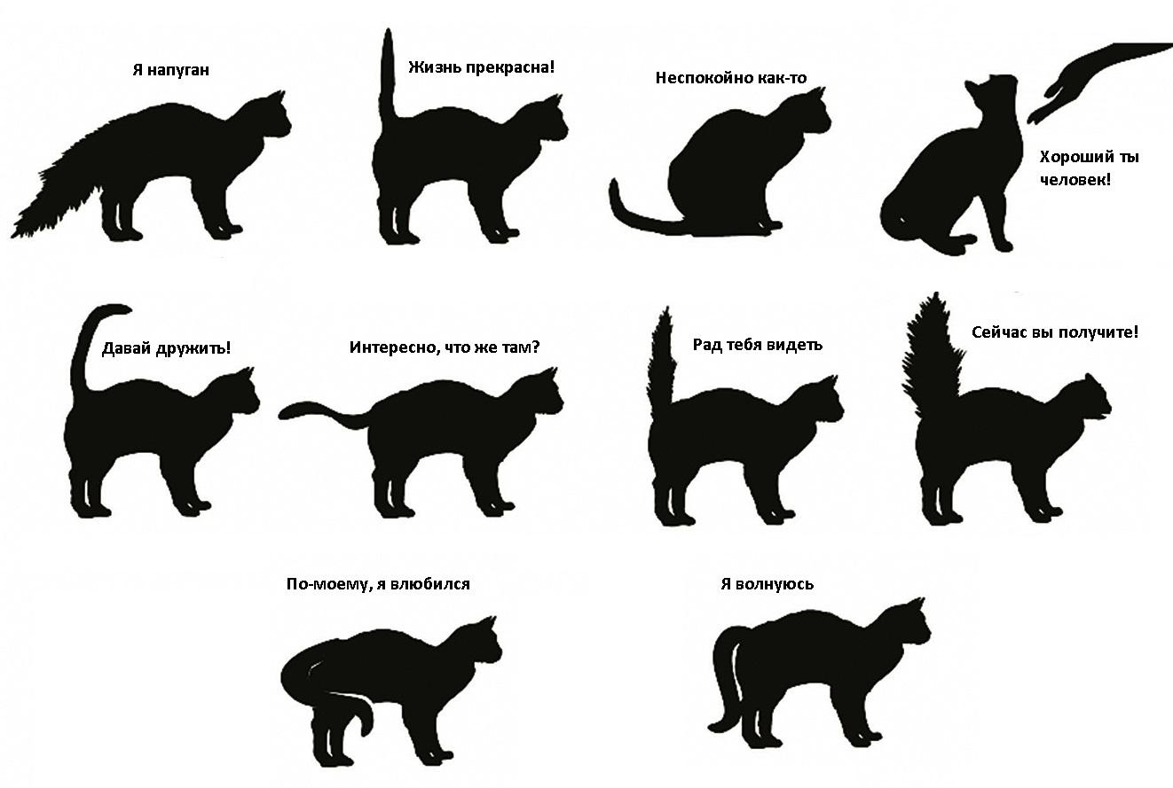 Выбираем себе котенка